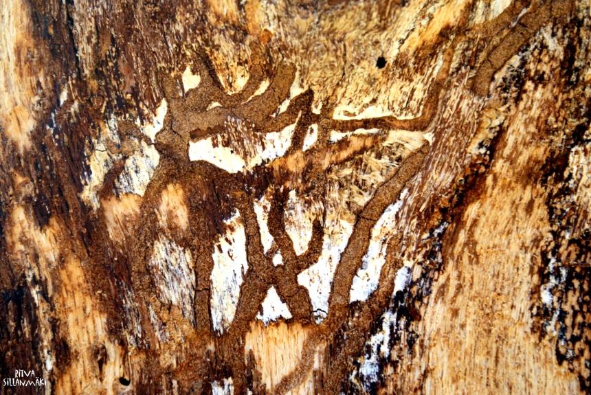 Art on an old oak tree