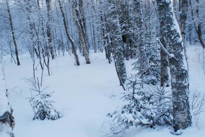 winter in the woods