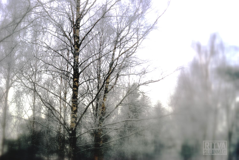 Tones - Birch tree