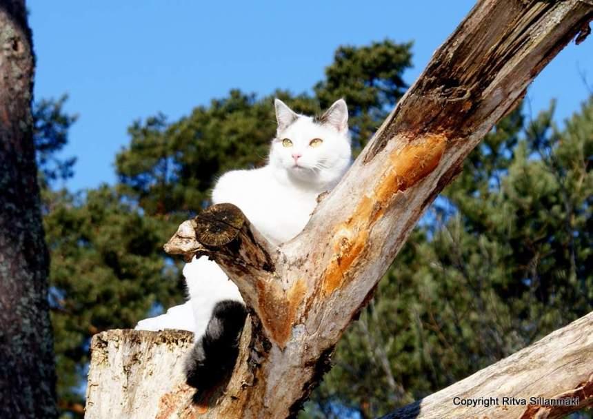 Sisko in a an old oak tree