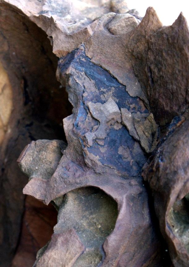 Kivi - Stone