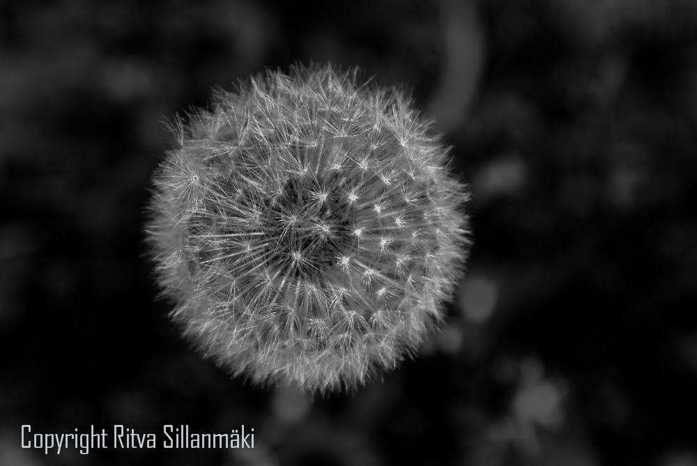 round BLACK and WHITE Friday # 4