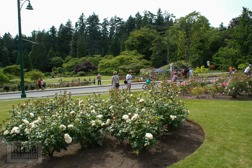 Vancouver, Stanley park-320