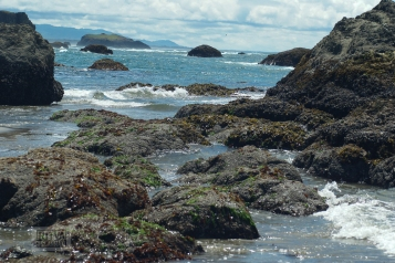 Oregon coastline - beaches-148