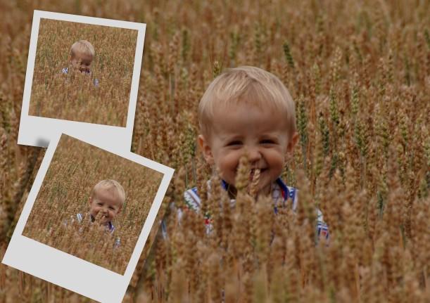 boy in wheatfields