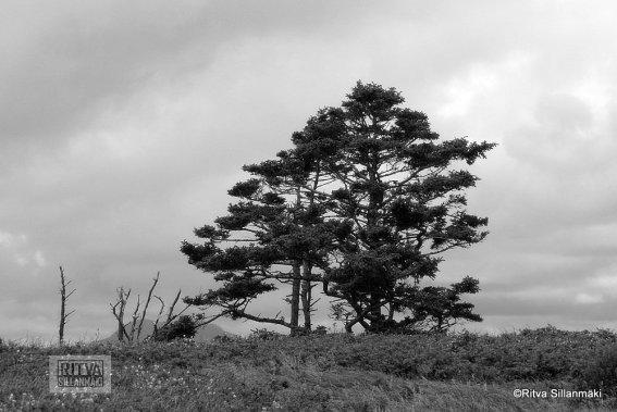 04-Oregon coastline - one lighthouse-23