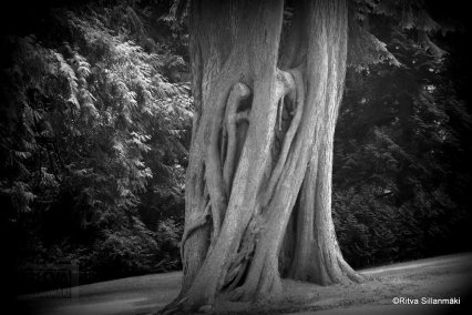 06-Cancouver, Stanley park-285