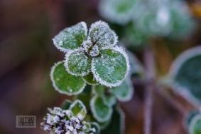 Frost bite 2013-10