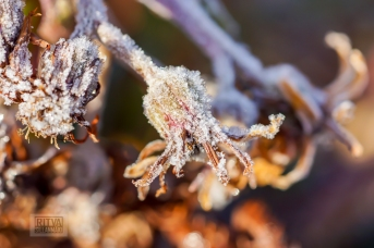 Frost bite 2013-17