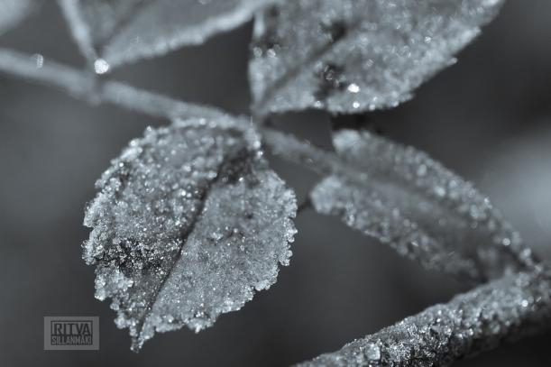 Frost bite  Splittones 2013-5