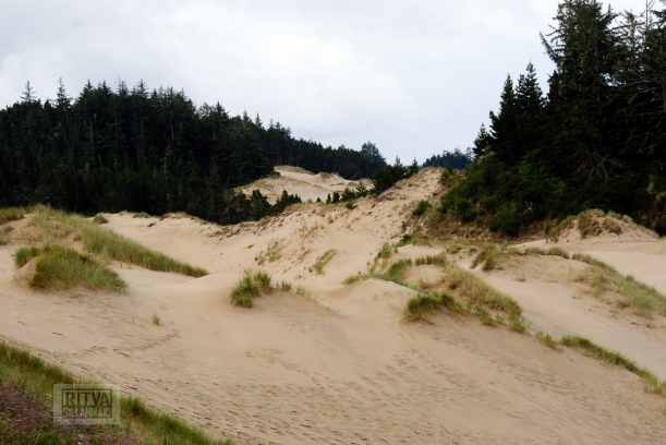 Oregon coastline - beaches-307