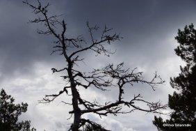 Tree in Kirkkonummi