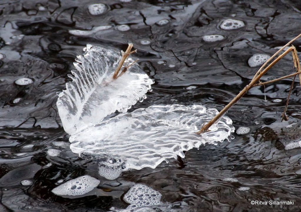 Ice wings