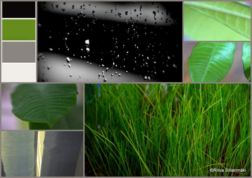 1-reflection, kumia, tulppaani