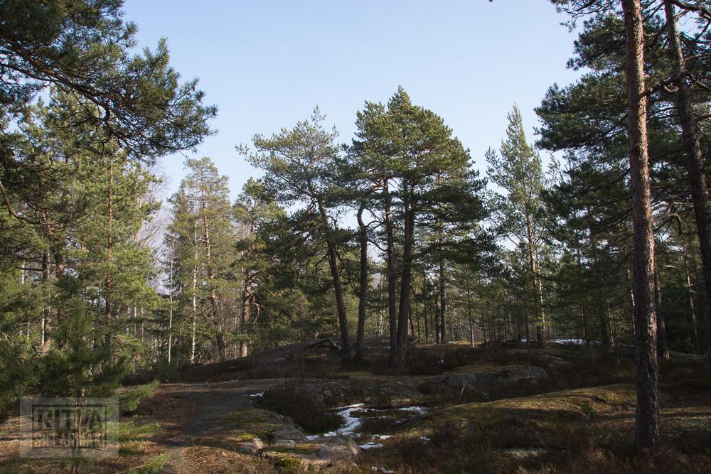 Ritva Sillanmäki (12 of 120)