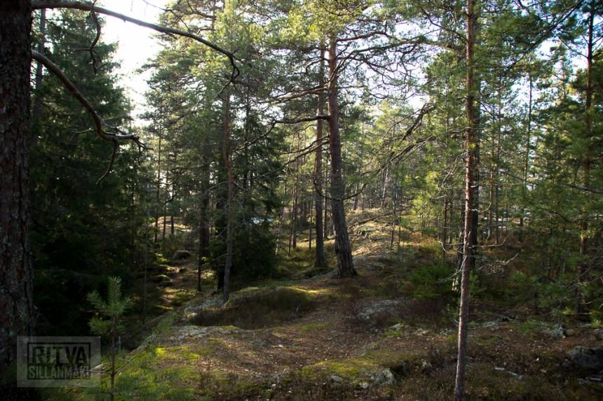 Ritva Sillanmäki (20 of 120)