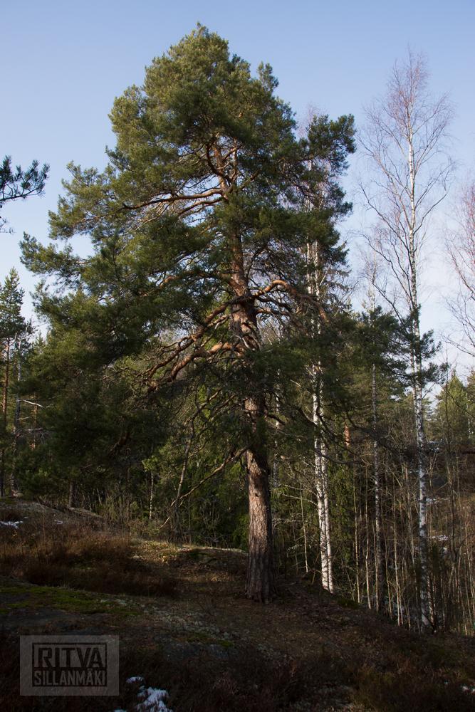 Ritva Sillanmäki (23 of 120)