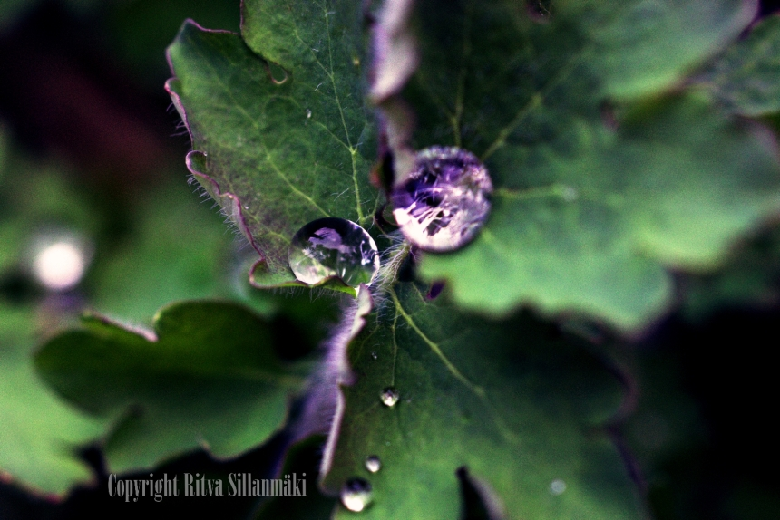 raindrops sign