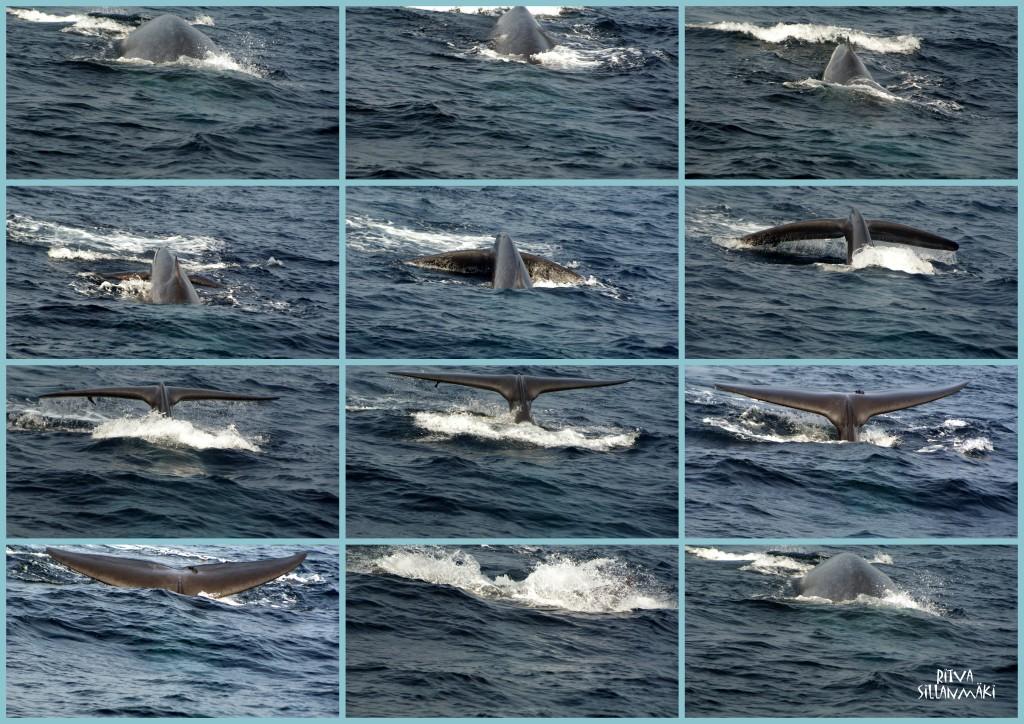 11-2012-02-07 SriLanka_2012