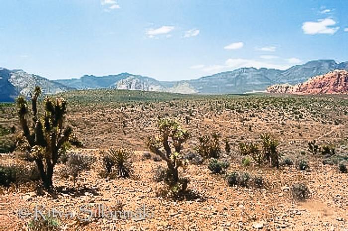 desert (2 of 2)