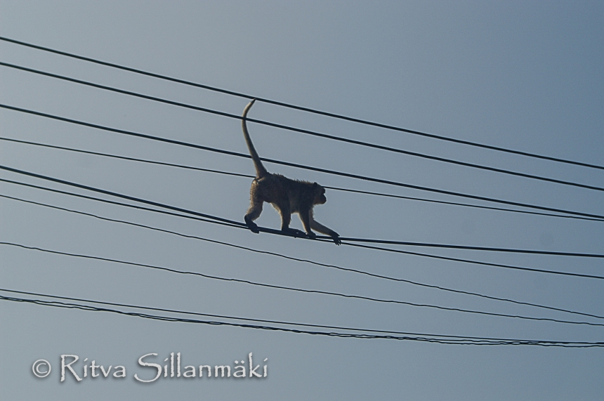 power lines (3 of 3)