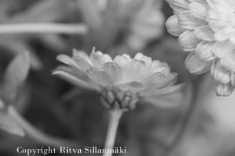 RS 2014-06-04 flo bw-10