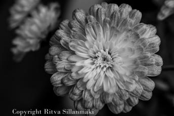 RS 2014-06-04 flo bw-9