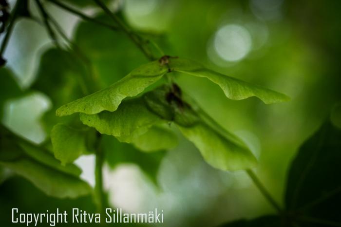 RS 2014-06-15 - ruuhijärvi-103