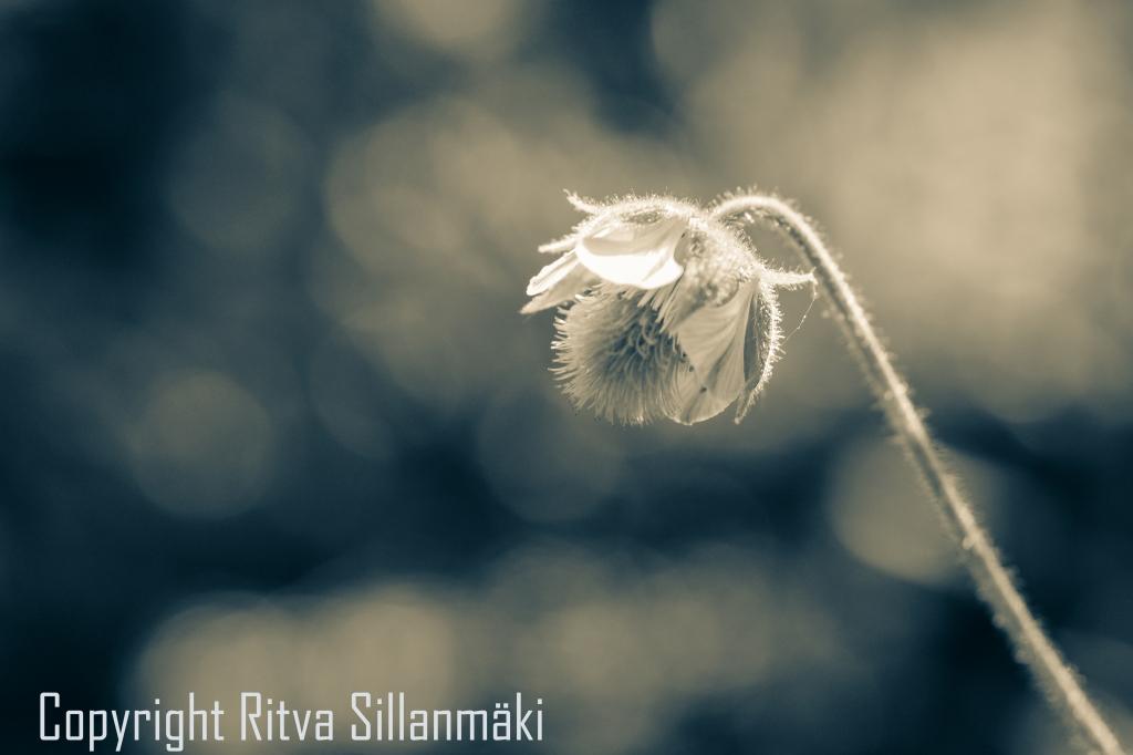 RS 2014-06-15 - ruuhijärvi-128