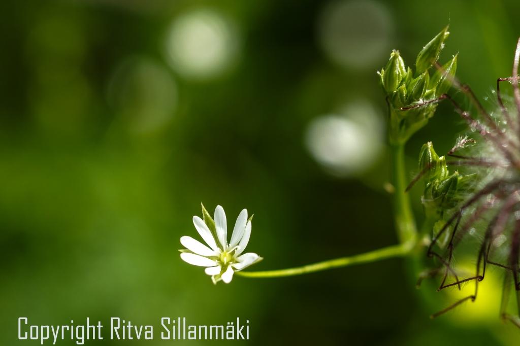RS 2014-06-15 - ruuhijärvi-142