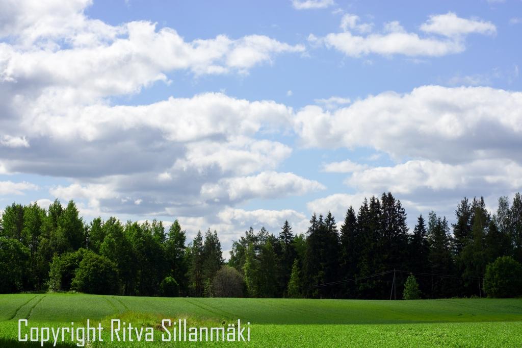 RS 2014-06-15 - ruuhijärvi-63