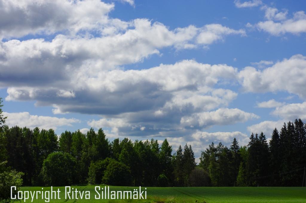 RS 2014-06-15 - ruuhijärvi-64