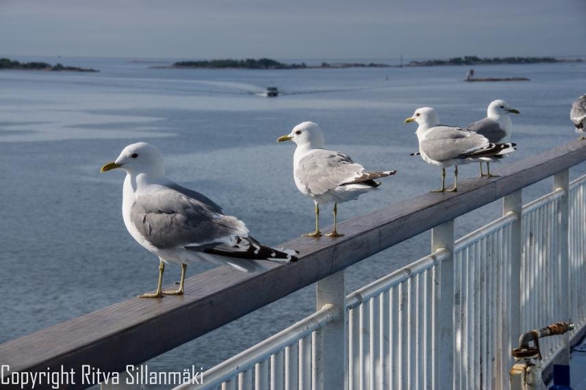 RS 2014-0611 - Helsinki coast-5