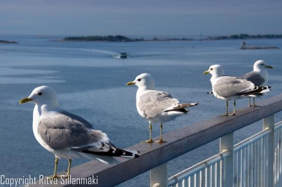 RS 2014-0611 - Helsinki coast-6