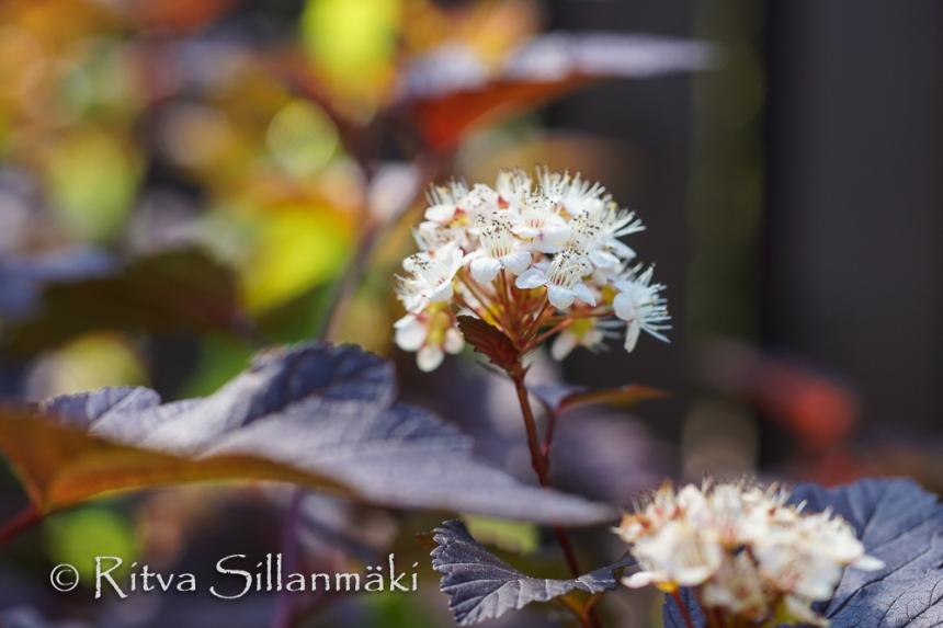 bro flowers (27 of 103)
