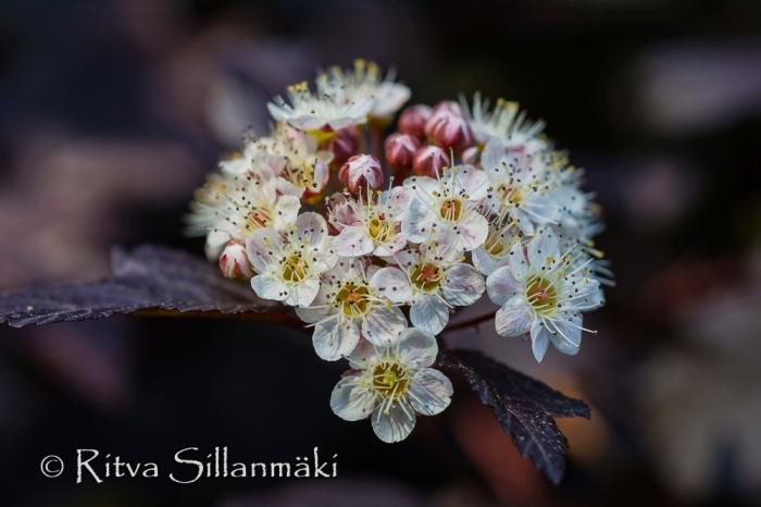 bro flowers (59 of 103)