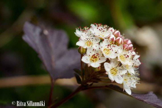 Flowers-9