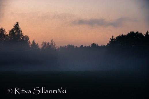 fog (10 of 75)