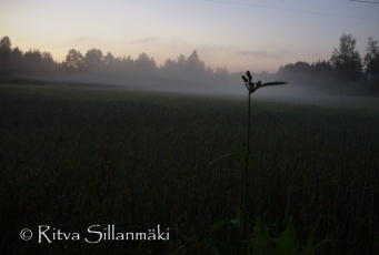 fog (12 of 75)