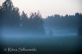 fog (19 of 75)