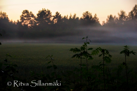 fog (6 of 75)