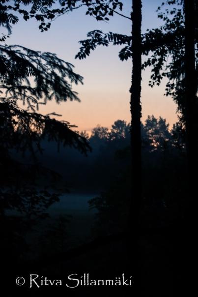 fog (66 of 75)