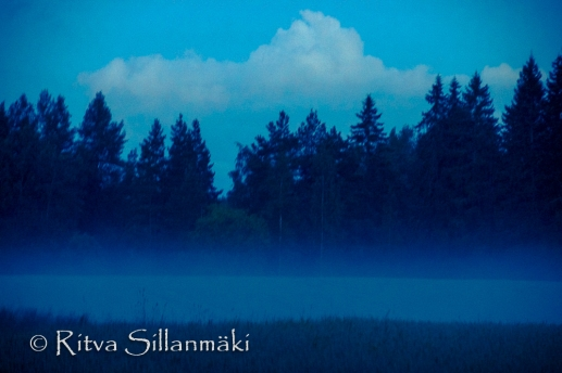 fog- Ritva Sillanmäki (40 of 45)