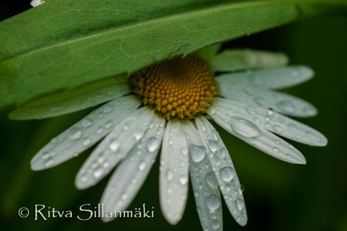 nature- Ritva Sillanmäki (12 of 40)