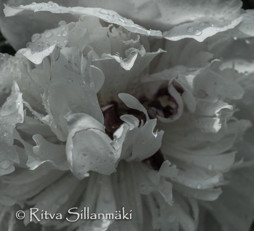 nature- Ritva Sillanmäki (6 of 40)