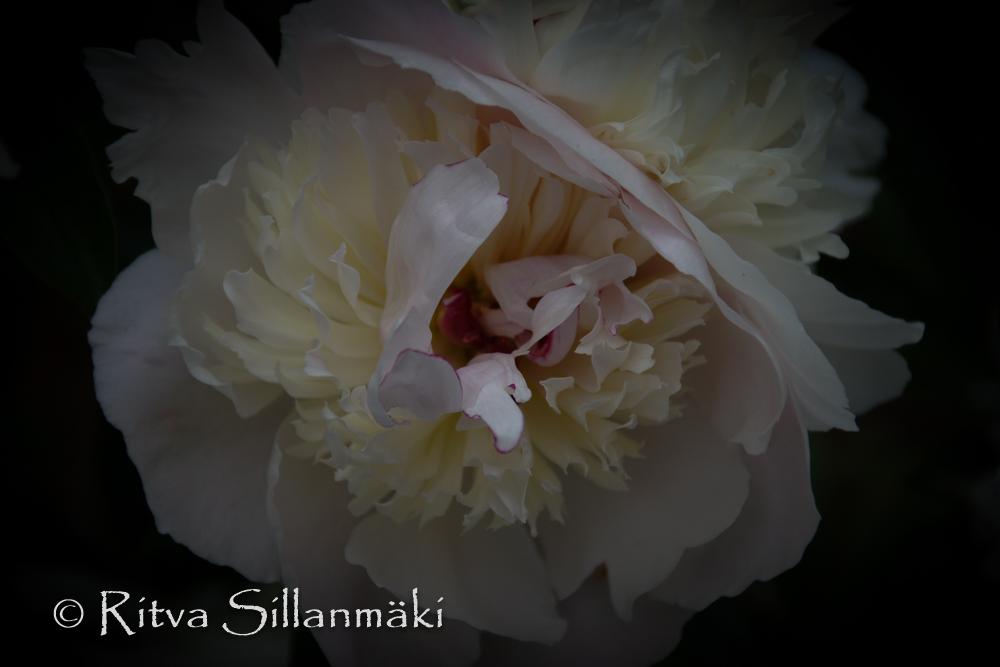 Natures flowers- Ritva Sillanmäki (11 of 43)