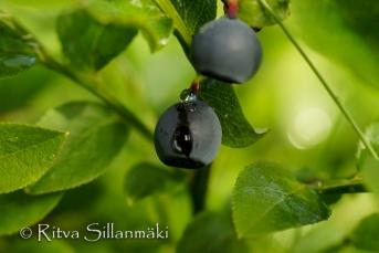 Natures flowers- Ritva Sillanmäki (12 of 80)