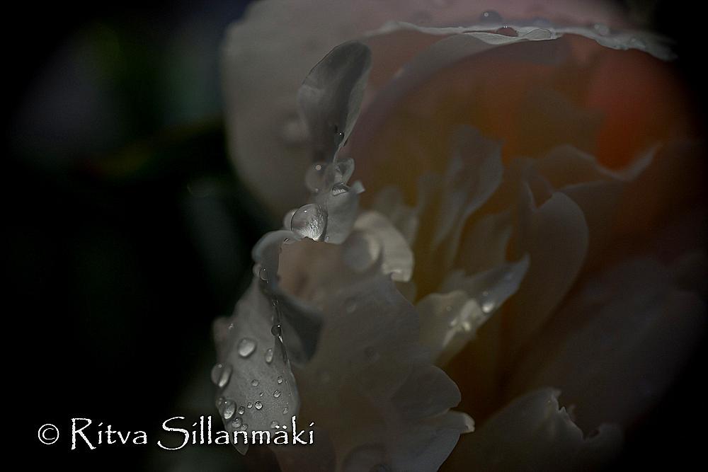 Natures flowers- Ritva Sillanmäki (6 of 80)