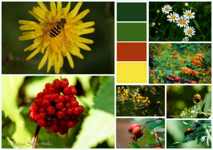 2-bro elokuu kukkia, marjoja1