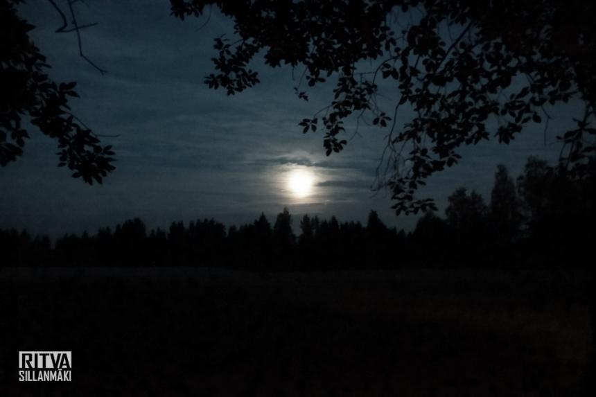 harvest moon (2 of 5)